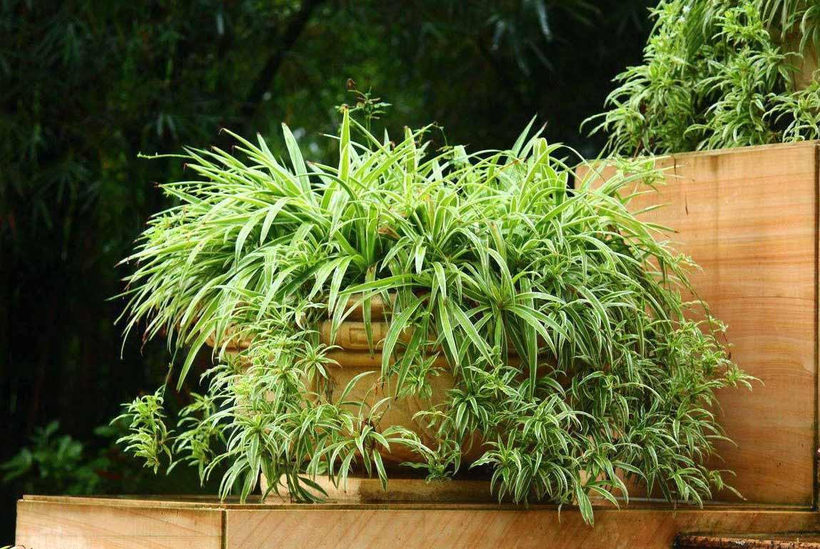 卧室植物千万不要乱放!这些才是适合的!