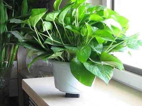 长沙装修公司丨室内装修摆放什么植物好?