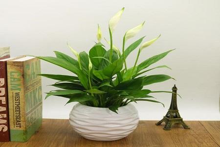长沙装修公司丨卧室装修摆放什么植物比较好